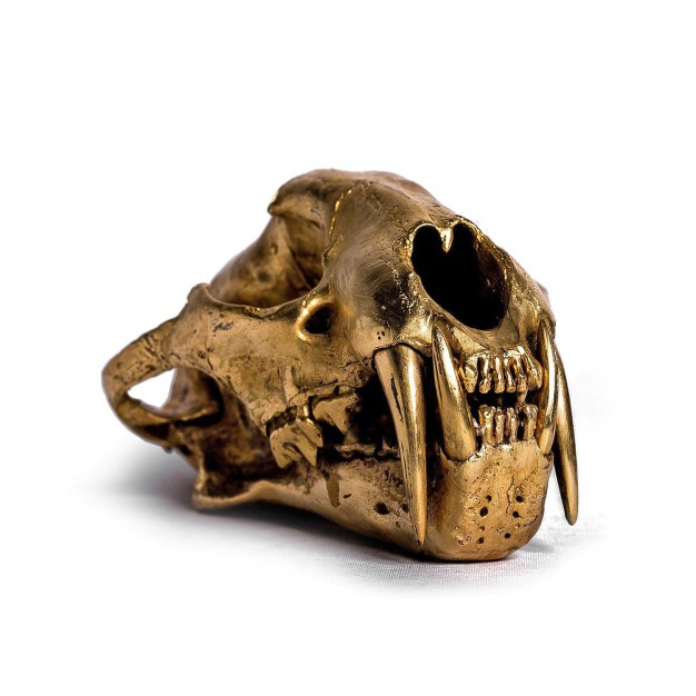 Acid Gold Leopard Skull
