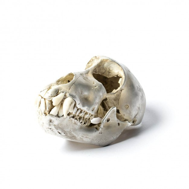 Acid Silver & Bone Monkey Skull
