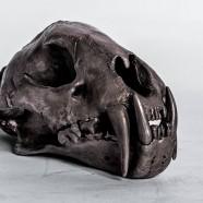 Acid Silver Leopard Skull