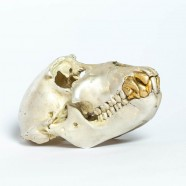 Acid Silver & Gold Monkey Skull