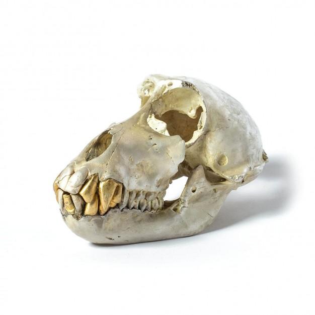 Acid Silver & Gold Monkey Skull