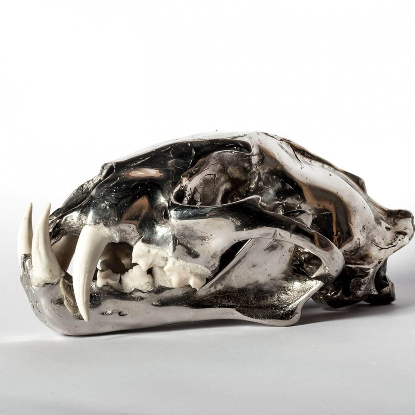 Chromed Brass & Bone Leopard Skull