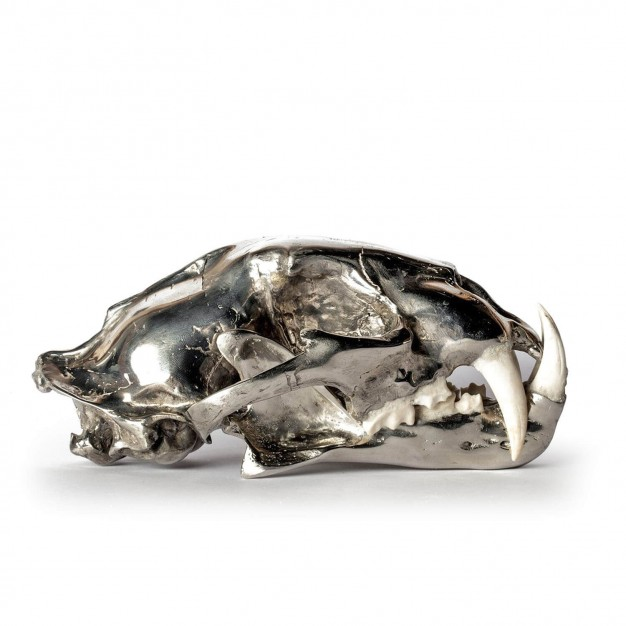 Chromed Brass & Bone Leopard Skull